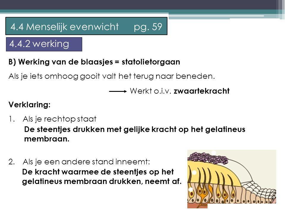 P. Feys - Sint – Jorisschool Menen B) Werking van de blaasjes = statolietorgaan Als je iets omhoog gooit valt het terug naar beneden. Verklaring: 1. 1