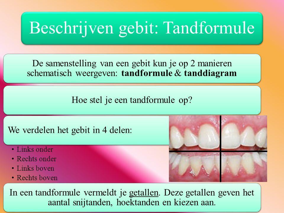 Beschrijven gebit: Tandformule De samenstelling van een gebit kun je op 2 manieren schematisch weergeven: tandformule & tanddiagram Hoe stel je een ta