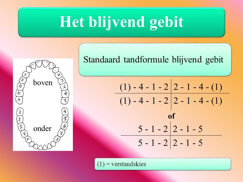 Het blijvend gebit (1) - 4 - 1 - 22 - 1 - 4 - (1) (1) - 4 - 1 - 22 - 1 - 4 - (1) 5 - 1 - 22 - 1 - 5 5 - 1 - 22 - 1 - 5 Standaard tandformule blijvend
