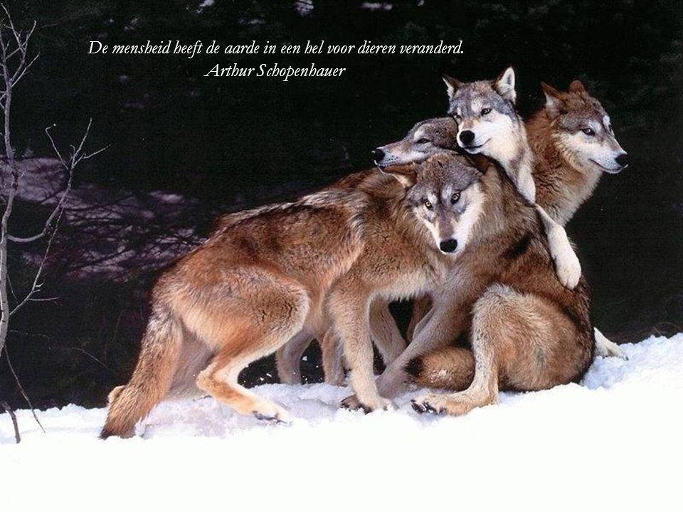 Todat je een dier heb lief gehad, zal een deel van je ziel slapende blijven. Anatole France