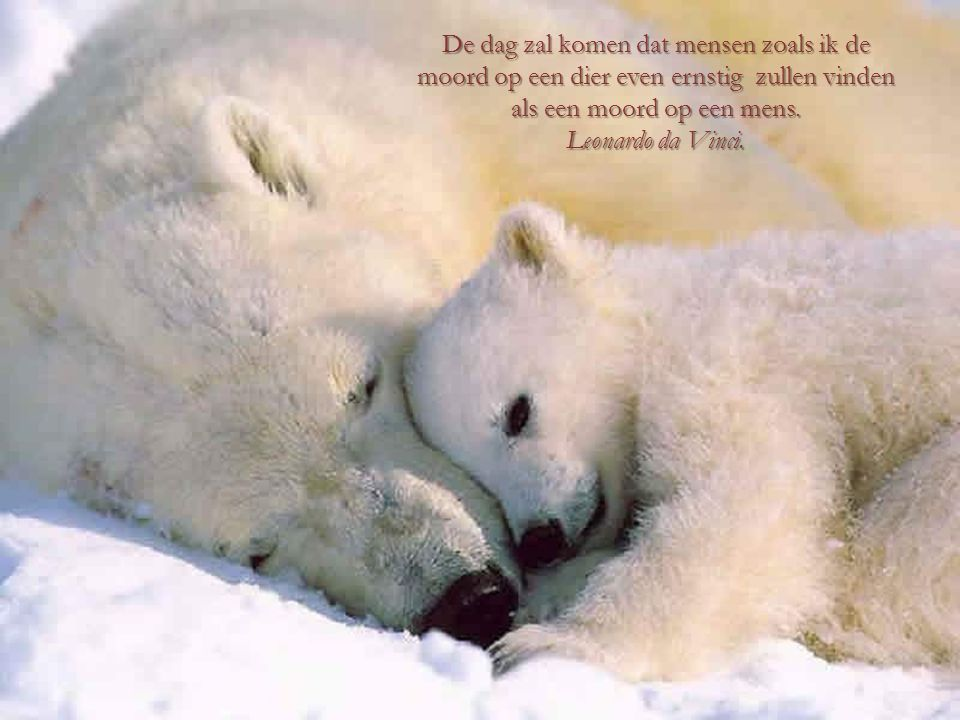 Een land of beschaving kan worden beoordeeld door de manier waarop het met haar de dieren omgaat. Mahatma Gandhi