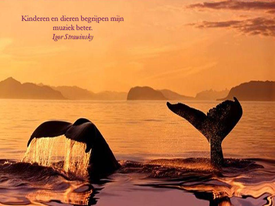 Liefde voor alle levende wezens is de meest nobele eigenschap van de mens. Charles Darwin Charles Darwin