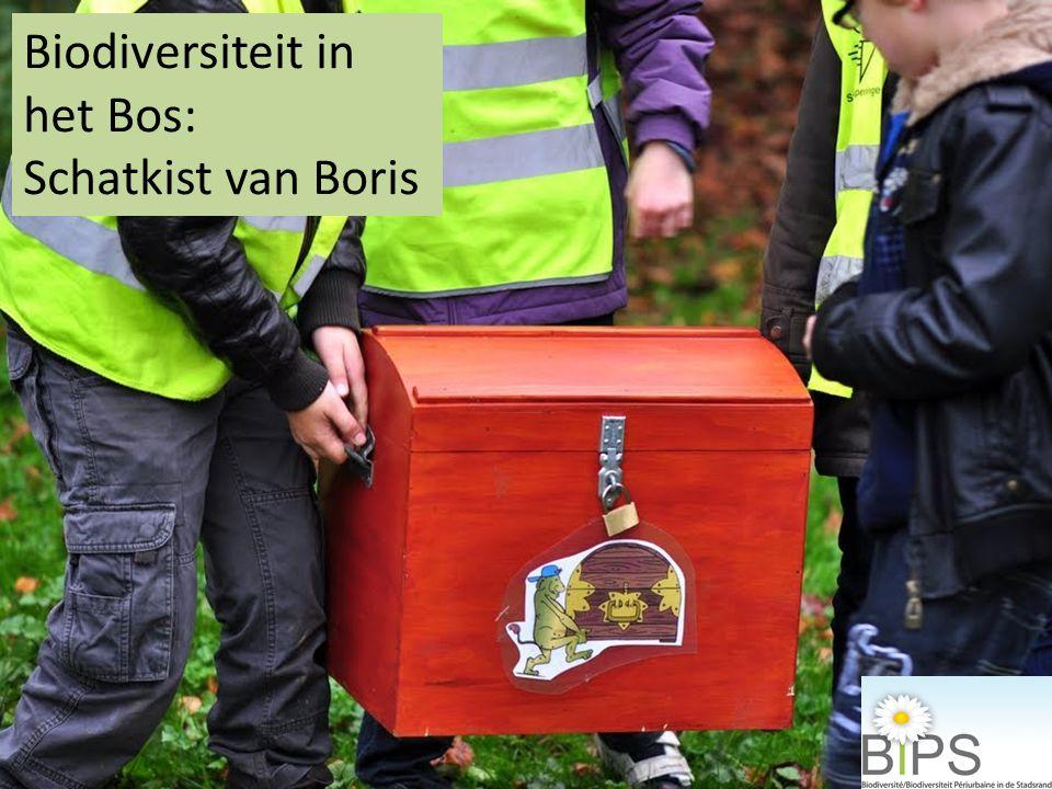 Biodiversiteit in het Bos: Schatkist van Boris
