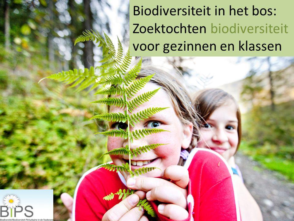 Biodiversiteit in het bos: Zoektochten biodiversiteit voor gezinnen en klassen