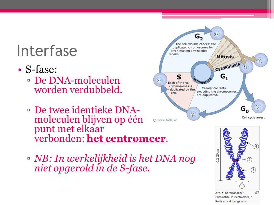 Interfase G 2 -fase: ▫Enzymen controleren beide DNA-moleculen op kopieerfouten.