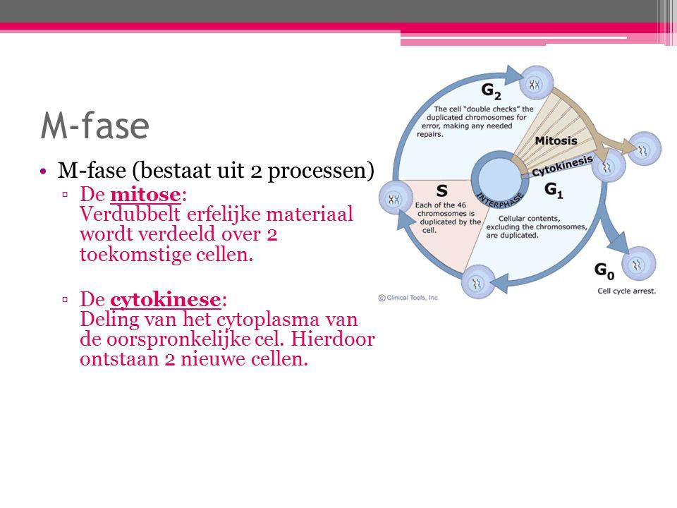 M-fase M-fase (bestaat uit 2 processen): ▫De mitose: Verdubbelt erfelijke materiaal wordt verdeeld over 2 toekomstige cellen.