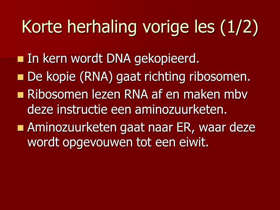 Korte herhaling vorige les (1/2) In kern wordt DNA gekopieerd. In kern wordt DNA gekopieerd. De kopie (RNA) gaat richting ribosomen. De kopie (RNA) ga
