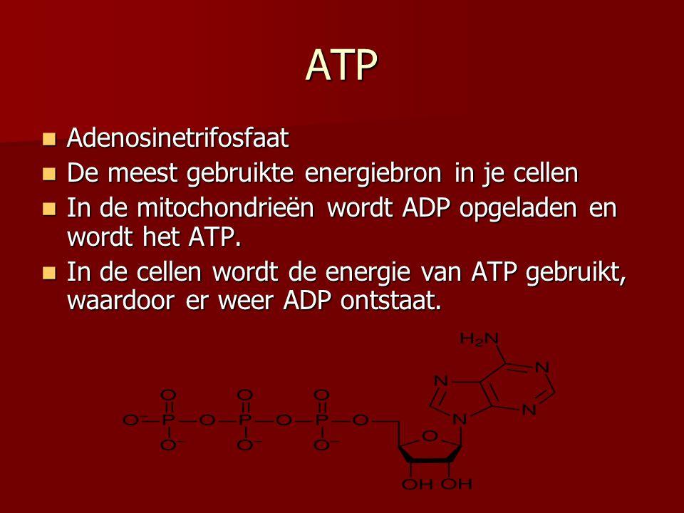 ATP Adenosinetrifosfaat Adenosinetrifosfaat De meest gebruikte energiebron in je cellen De meest gebruikte energiebron in je cellen In de mitochondrie