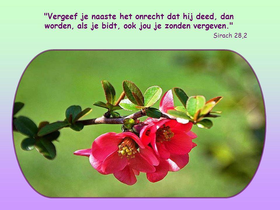 Vergeef je naaste het onrecht dat hij deed, dan worden, als je bidt, ook jou je zonden vergeven. Sirach 28,2