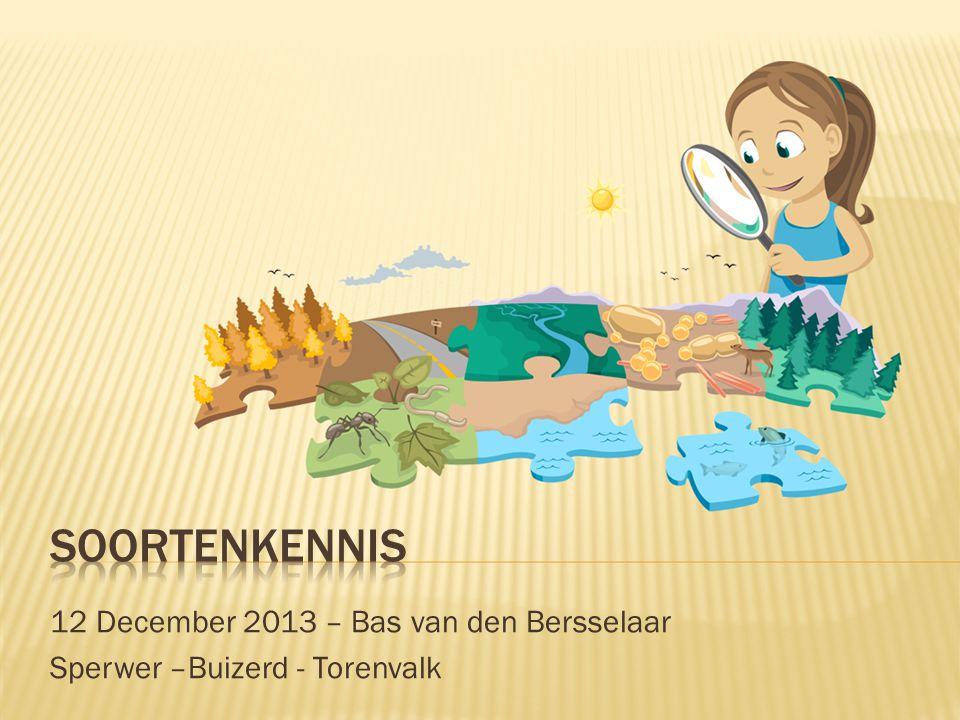 12 December 2013 – Bas van den Bersselaar Sperwer –Buizerd - Torenvalk