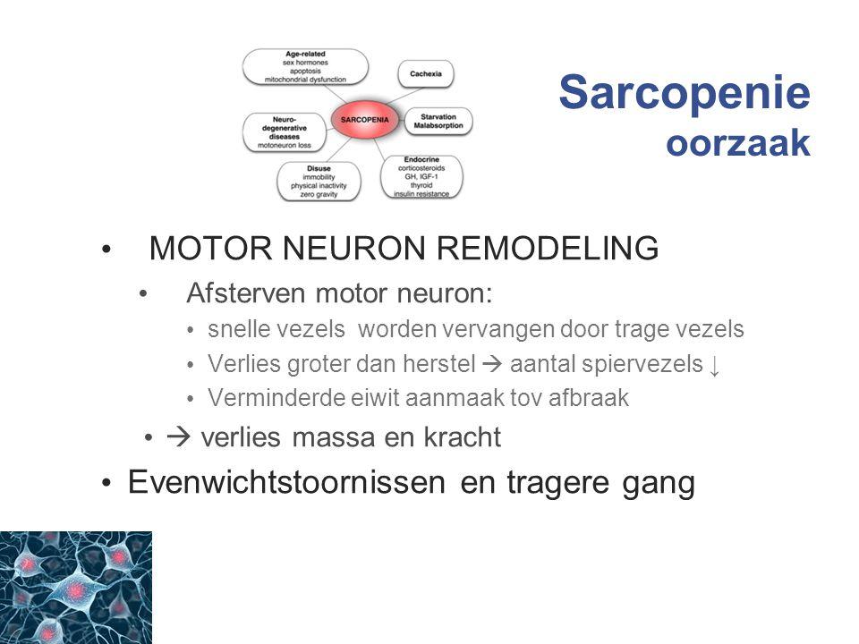 Sarcopenie oorzaak MOTOR NEURON REMODELING Afsterven motor neuron: snelle vezels worden vervangen door trage vezels Verlies groter dan herstel  aanta