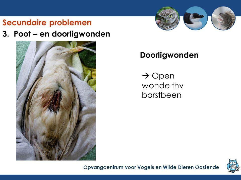 Doorligwonden  Open wonde thv borstbeen Secundaire problemen Opvangcentrum voor Vogels en Wilde Dieren Oostende 3. Poot – en doorligwonden