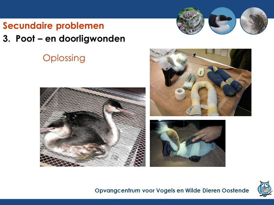 Oplossing Secundaire problemen Opvangcentrum voor Vogels en Wilde Dieren Oostende 3. Poot – en doorligwonden