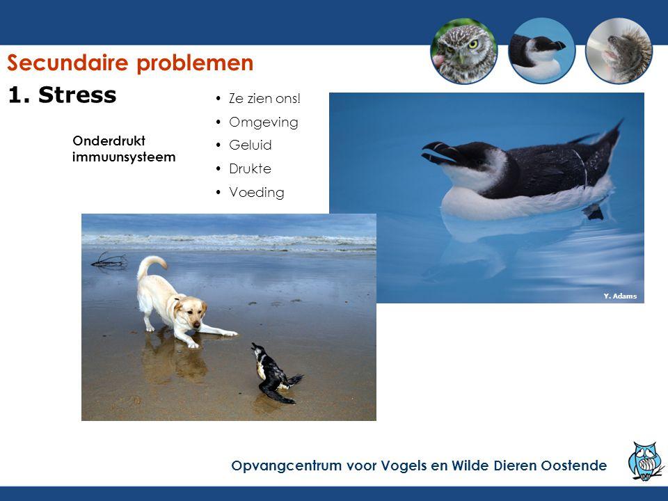 Onderdrukt immuunsysteem Ze zien ons! Omgeving Geluid Drukte Voeding Y. Adams Secundaire problemen Opvangcentrum voor Vogels en Wilde Dieren Oostende