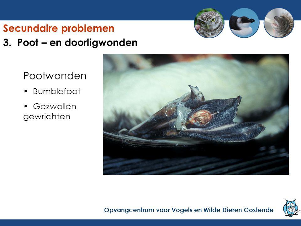 Oplossing Secundaire problemen Opvangcentrum voor Vogels en Wilde Dieren Oostende 3.