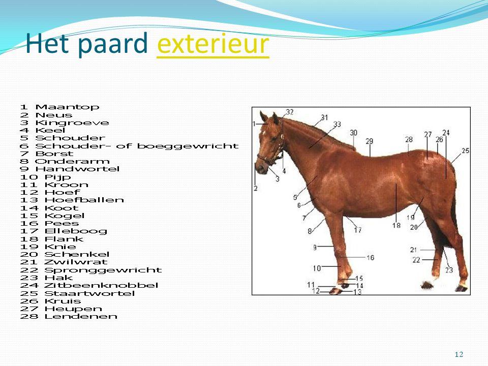 Het paard exterieurexterieur 12