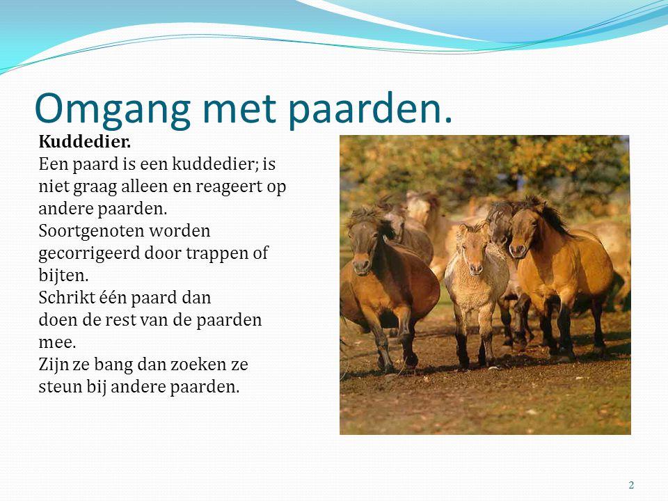 Omgang met paarden. Kuddedier. Een paard is een kuddedier; is niet graag alleen en reageert op andere paarden. Soortgenoten worden gecorrigeerd door t
