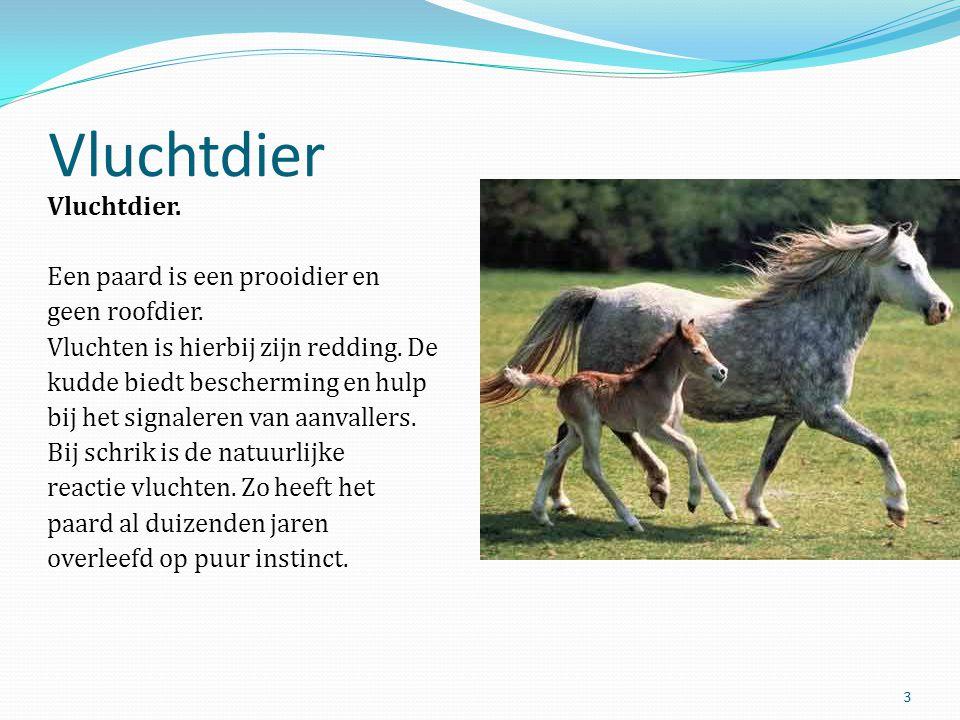 Vluchtdier Vluchtdier. Een paard is een prooidier en geen roofdier. Vluchten is hierbij zijn redding. De kudde biedt bescherming en hulp bij het signa