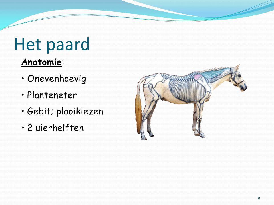 Het paard Anatomie: Onevenhoevig Planteneter Gebit; plooikiezen 2 uierhelften 9