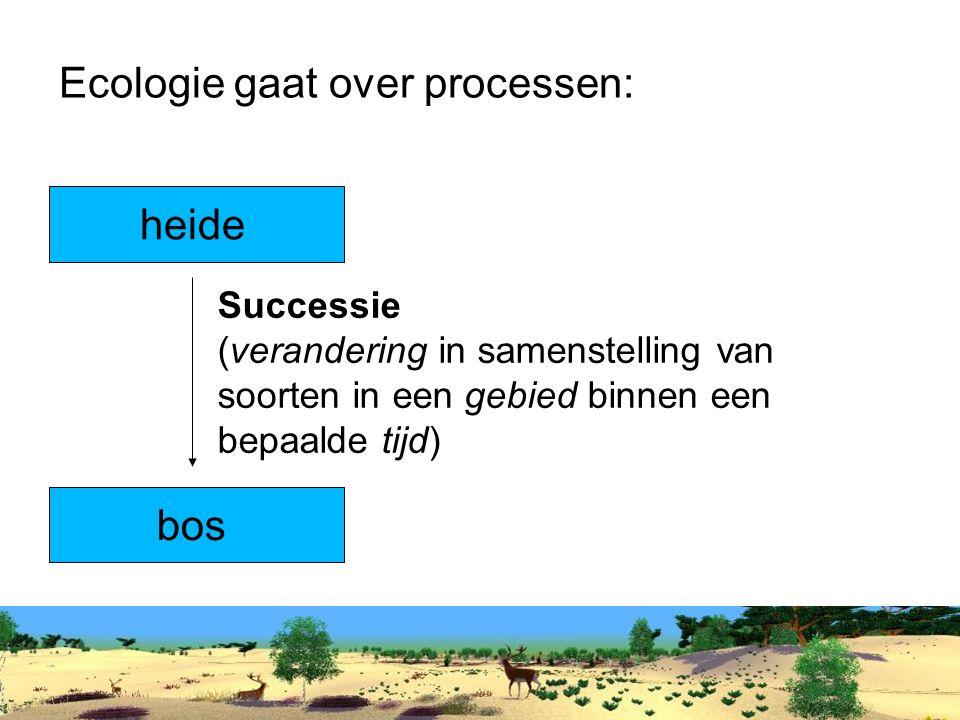 Ecologie gaat over processen: heide bos Successie (verandering in samenstelling van soorten in een gebied binnen een bepaalde tijd)
