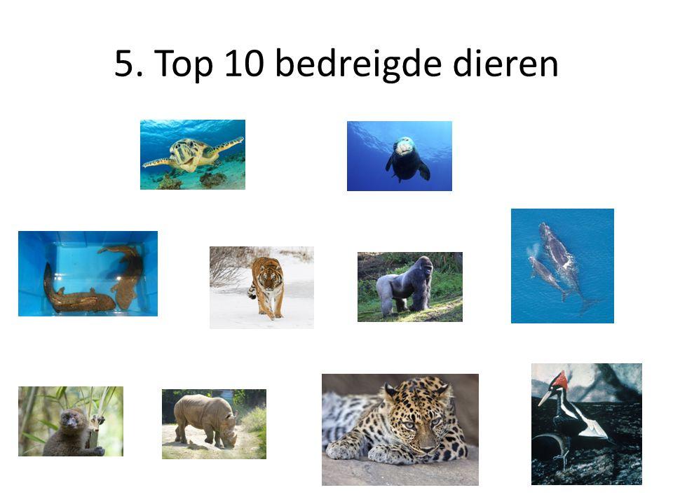 5. Top 10 bedreigde dieren