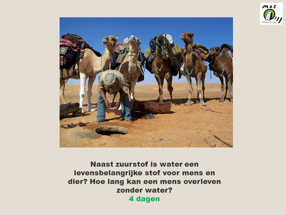 Naast zuurstof is water een levensbelangrijke stof voor mens en dier.