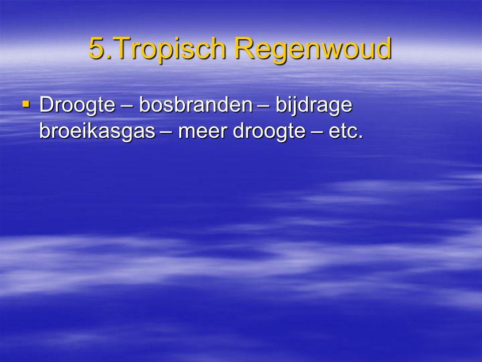 5.Tropisch Regenwoud  Droogte – bosbranden – bijdrage broeikasgas – meer droogte – etc.