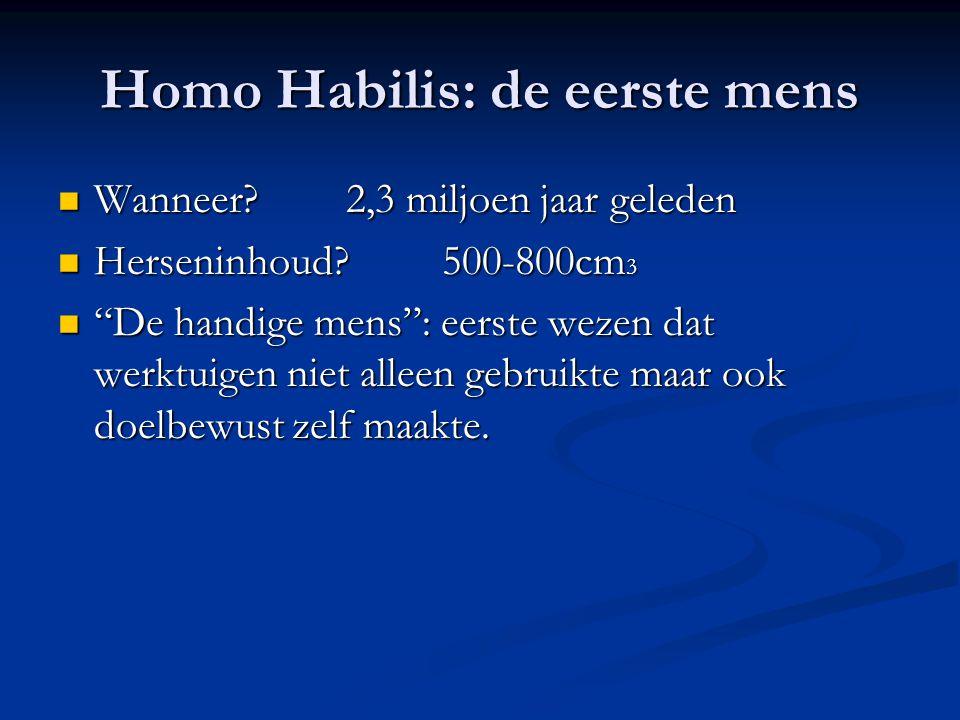 """Homo Habilis: de eerste mens Wanneer?2,3 miljoen jaar geleden Wanneer?2,3 miljoen jaar geleden Herseninhoud?500-800cm 3 Herseninhoud?500-800cm 3 """"De h"""