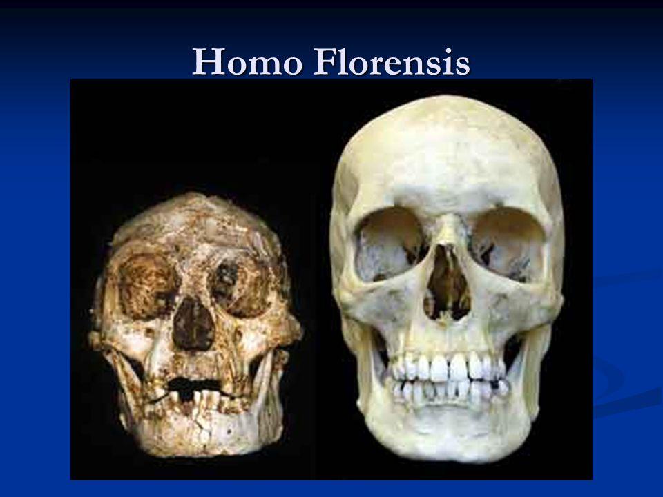 Homo Florensis