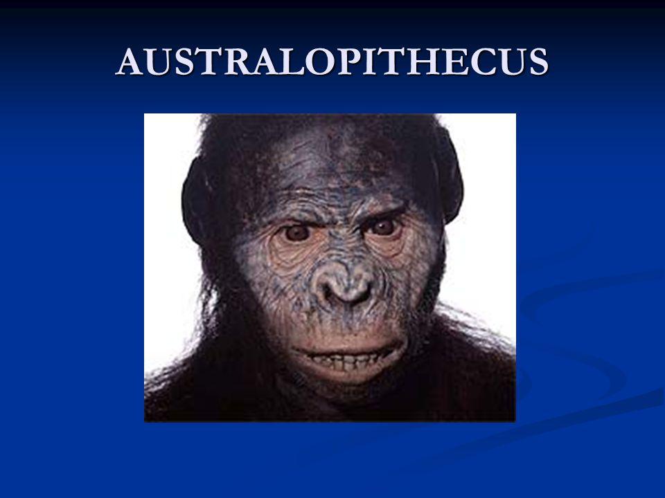 De Homo Sapiens Sapiens Cro-Magnon: homo sapiens sapiens die in Europa leefde Cro-Magnon: homo sapiens sapiens die in Europa leefde De homo sapiens sapiens verspreidde zich over 5 continenten: Afrika / Europa /Azië / Australië / Amerika De homo sapiens sapiens verspreidde zich over 5 continenten: Afrika / Europa /Azië / Australië / Amerika