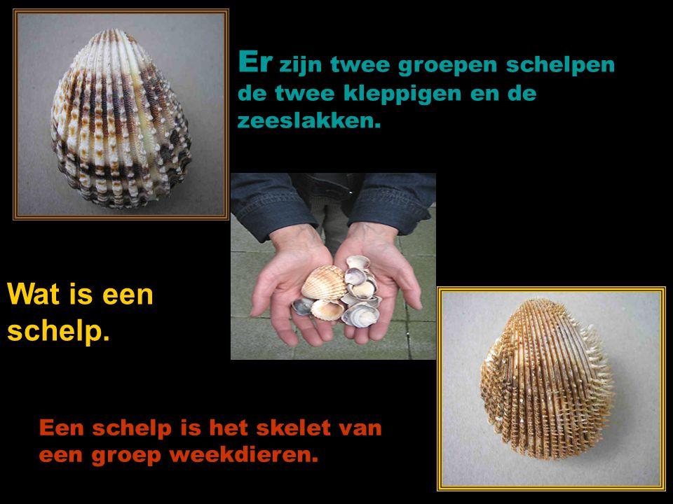 made by tillygemaakt voor: www.powerpointsite-bep.nl Powerpoint: Tilly