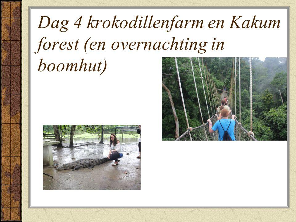 Dag 4 krokodillenfarm en Kakum forest (en overnachting in boomhut)