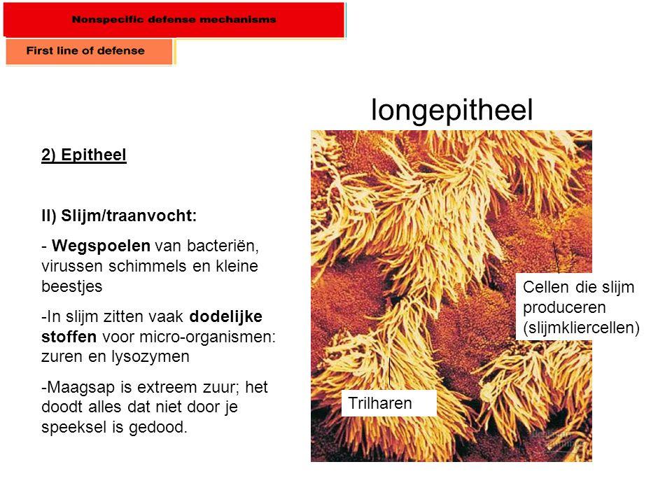 2) Epitheel II) Slijm/traanvocht: - Wegspoelen van bacteriën, virussen schimmels en kleine beestjes -In slijm zitten vaak dodelijke stoffen voor micro