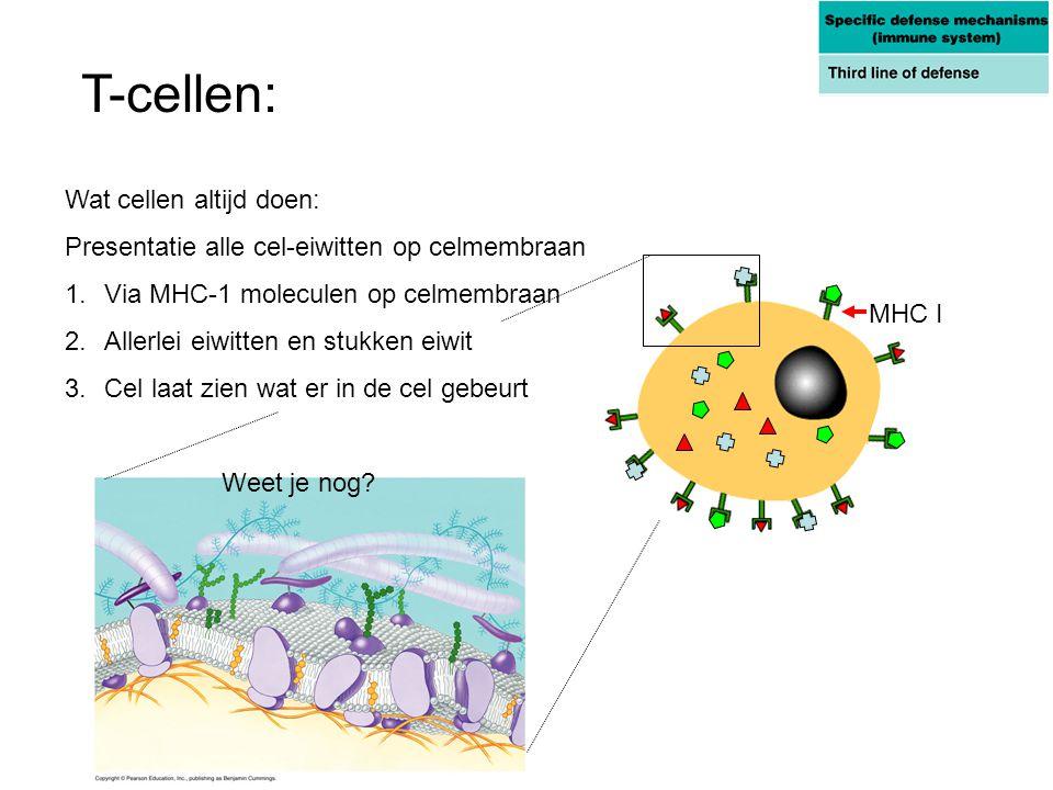 Wat cellen altijd doen: Presentatie alle cel-eiwitten op celmembraan 1.Via MHC-1 moleculen op celmembraan 2.Allerlei eiwitten en stukken eiwit 3.Cel l