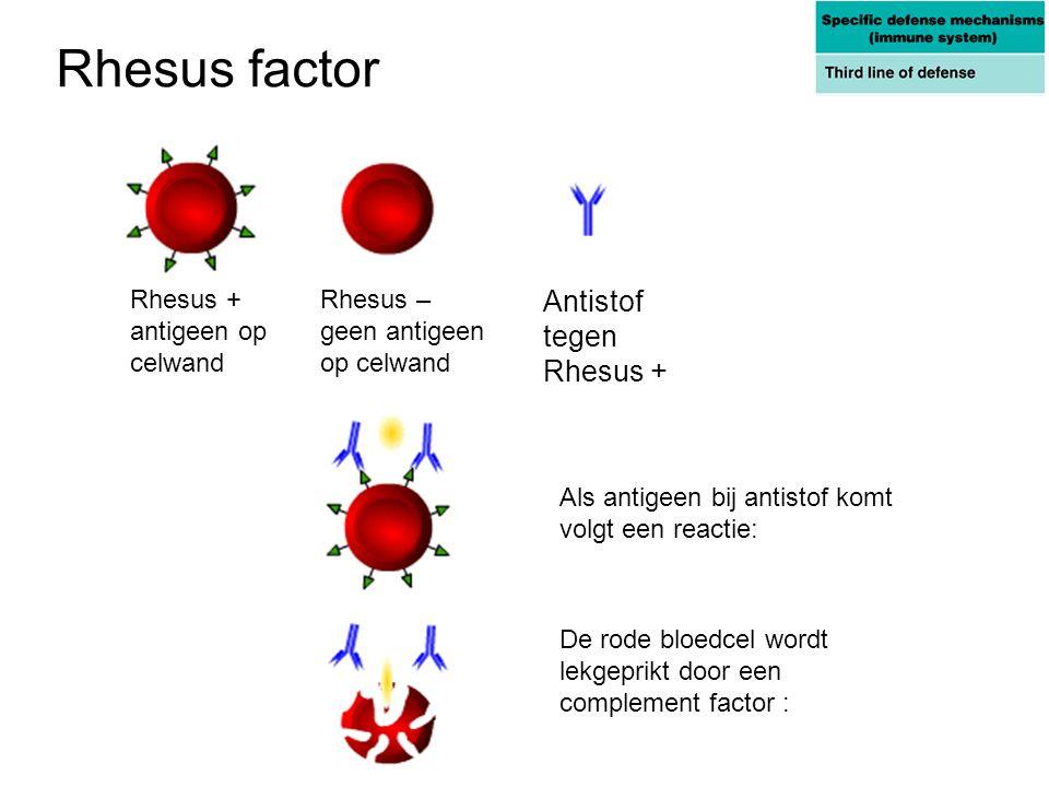 Rhesus factor Rhesus + antigeen op celwand Rhesus – geen antigeen op celwand Antistof tegen Rhesus + Als antigeen bij antistof komt volgt een reactie: