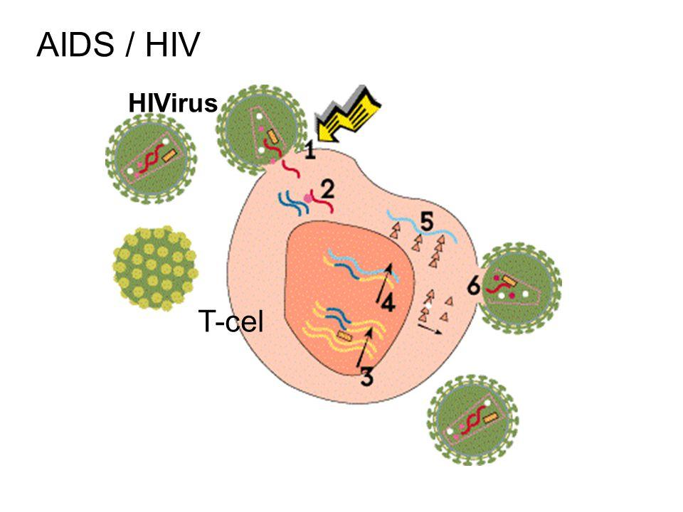 AIDS / HIV T-cel HIVirus