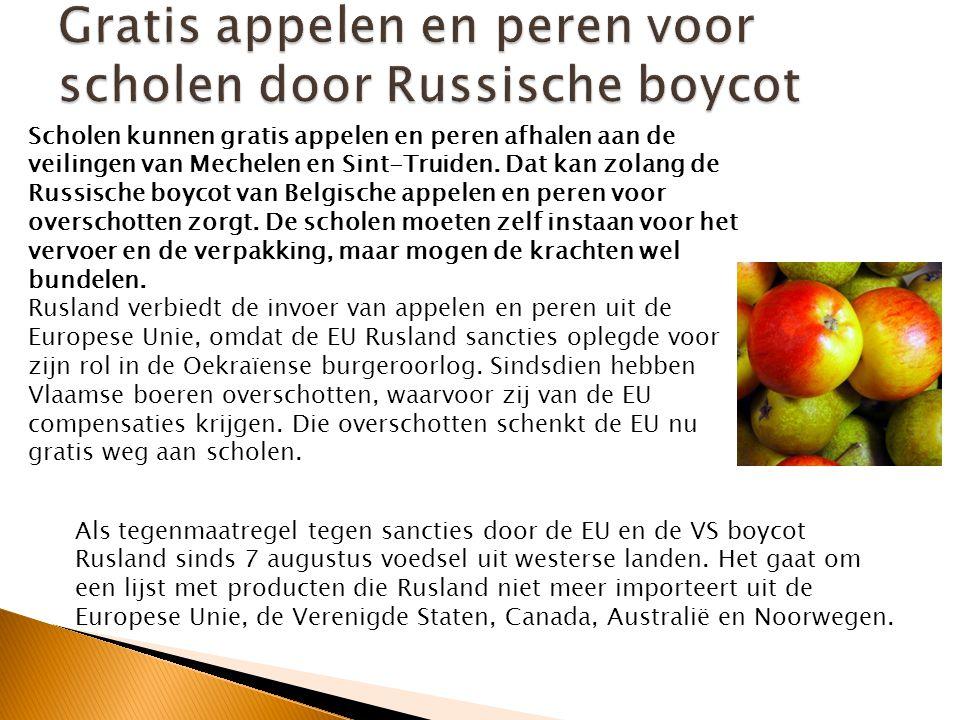 Boomgaard met sinaasappelen 0,08 800 0 100 0