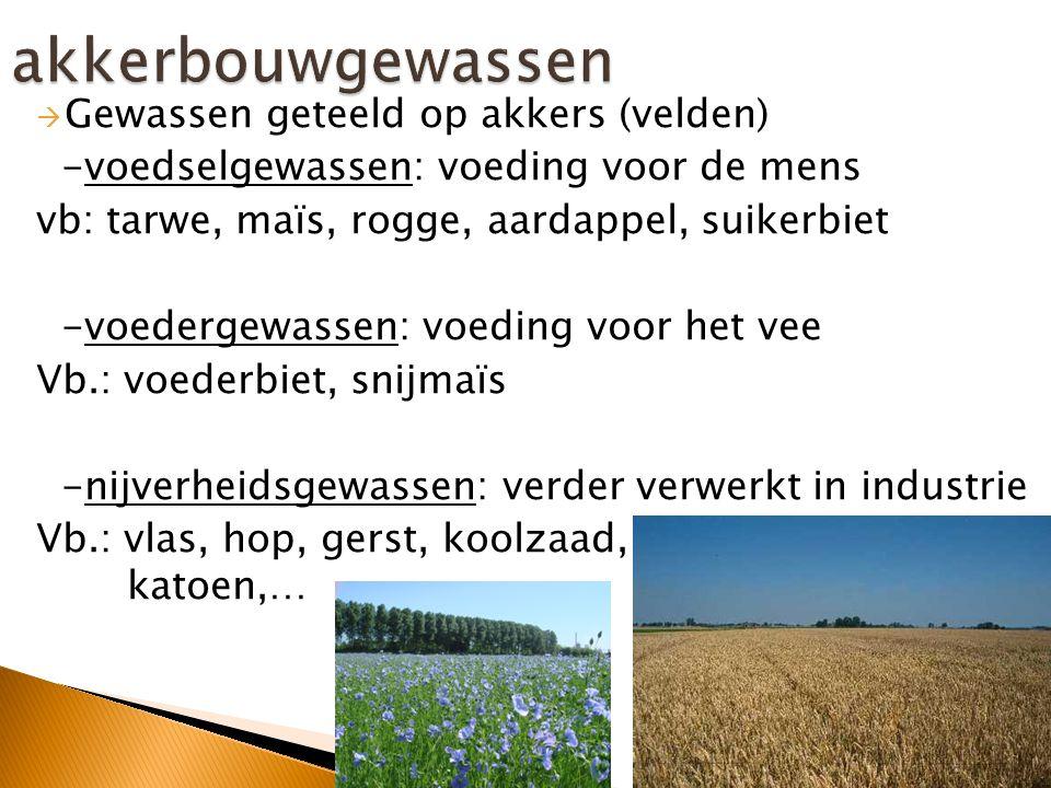  Akkers  Heeft genoeg hectare nodig om rendabel (winstgevend) te zijn  Grote machines  Landbouwproducten: voedselgewassen, voedergewassen, nijverheidsgewassen