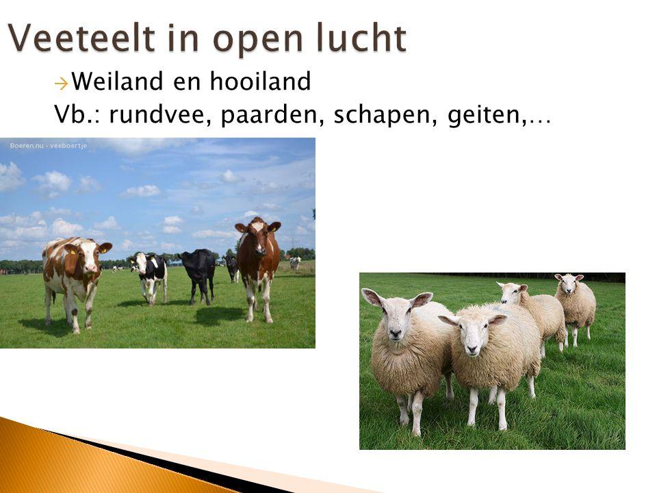 Dieren worden gekweekt  Herkenbaar aan de stallen voor het vee  Landbouwproducten: vlees, melk, eieren, andere dierlijke producten,…