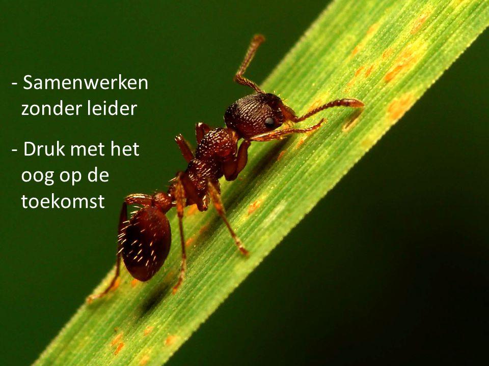 - Samenwerken zonder leider - Druk met het oog op de toekomst Leer van de mieren (Spreuken 6:6)