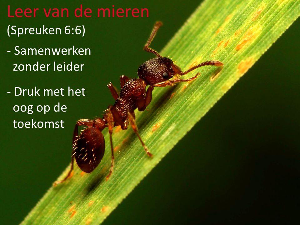 - Samenwerken zonder leider - Druk met het oog op de toekomst Leer van de mieren (Spreuken 6:6) - kolonievormend