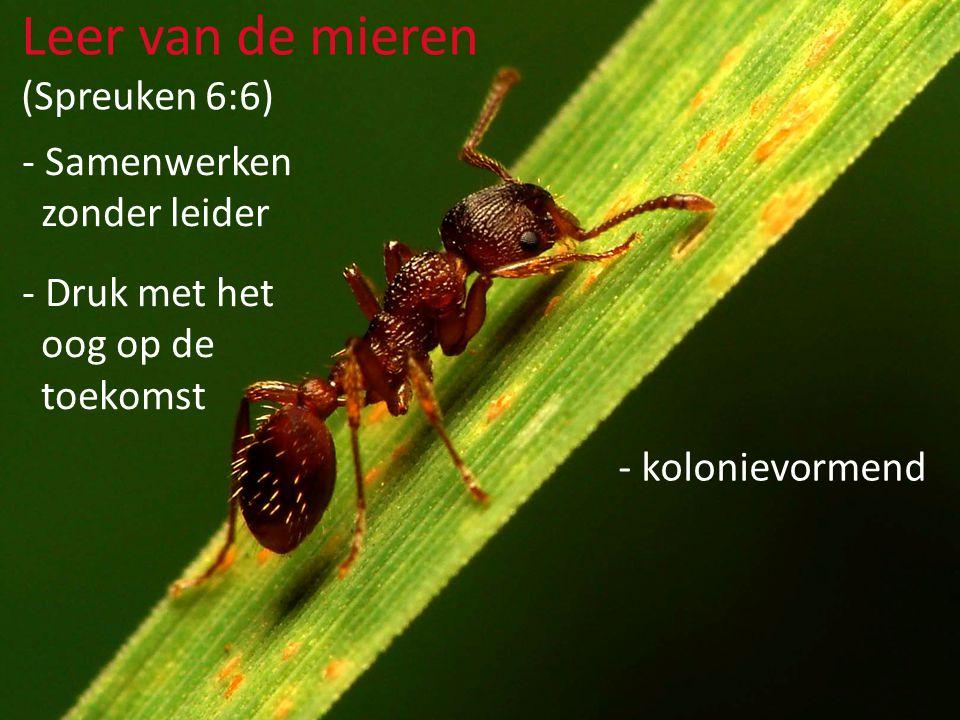 - Samenwerken zonder leider - Druk met het oog op de toekomst Leer van de mieren (Spreuken 6:6) - kolonievormend - gezamenlijke broedzorg