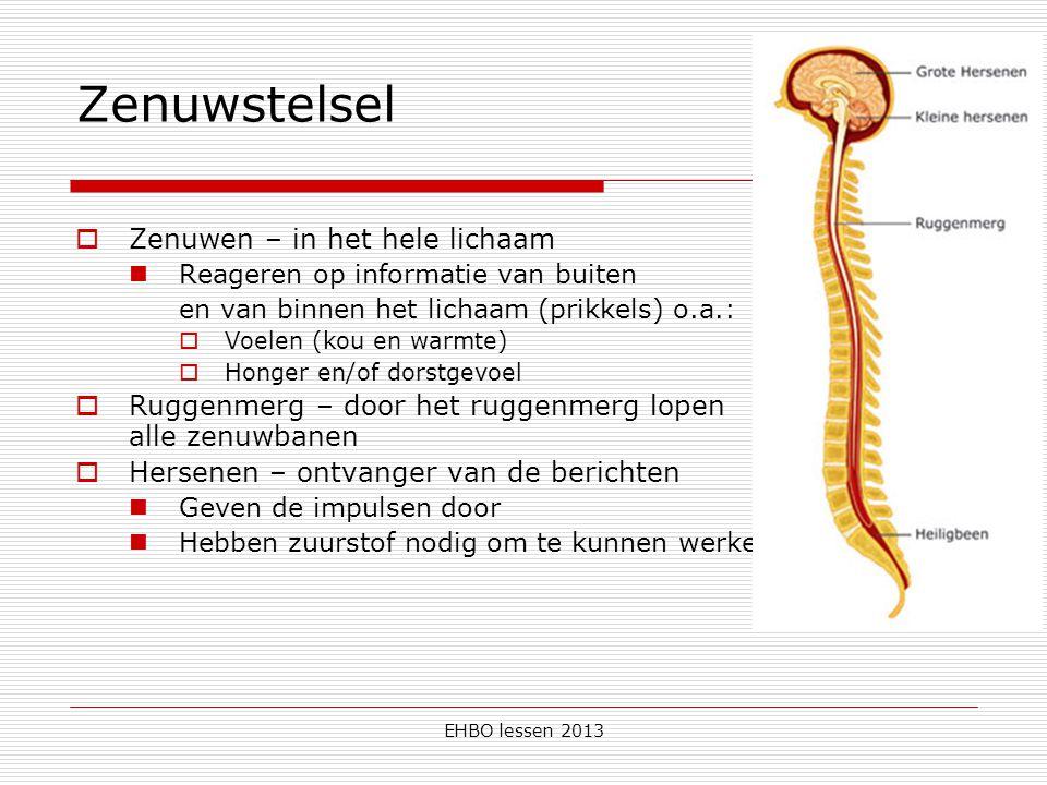 EHBO lessen 2013 Zenuwstelsel  Zenuwen – in het hele lichaam Reageren op informatie van buiten en van binnen het lichaam (prikkels) o.a.:  Voelen (k