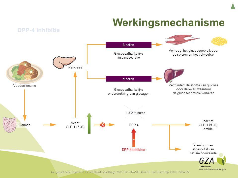 Pancreas Actief GLP-1 (7-36) Inactief GLP-1 (9-36) amide 2 aminozuren afgesplitst van het amino-uiteinde Vermindert de afgifte van glucose door de lever, waardoor de glucosecontrole verbetert Verhoogt het glucosegebruik door de spieren en het vetweefsel Glucoseafhankelijke onderdrukking van glucagon α-cellen Glucoseafhankelijke insulinesecretie β-cellen Voedselinname DarmenDPP-4 Werkingsmechanisme DPP-4 inhibitie Aangepast naar Drucker DJ.