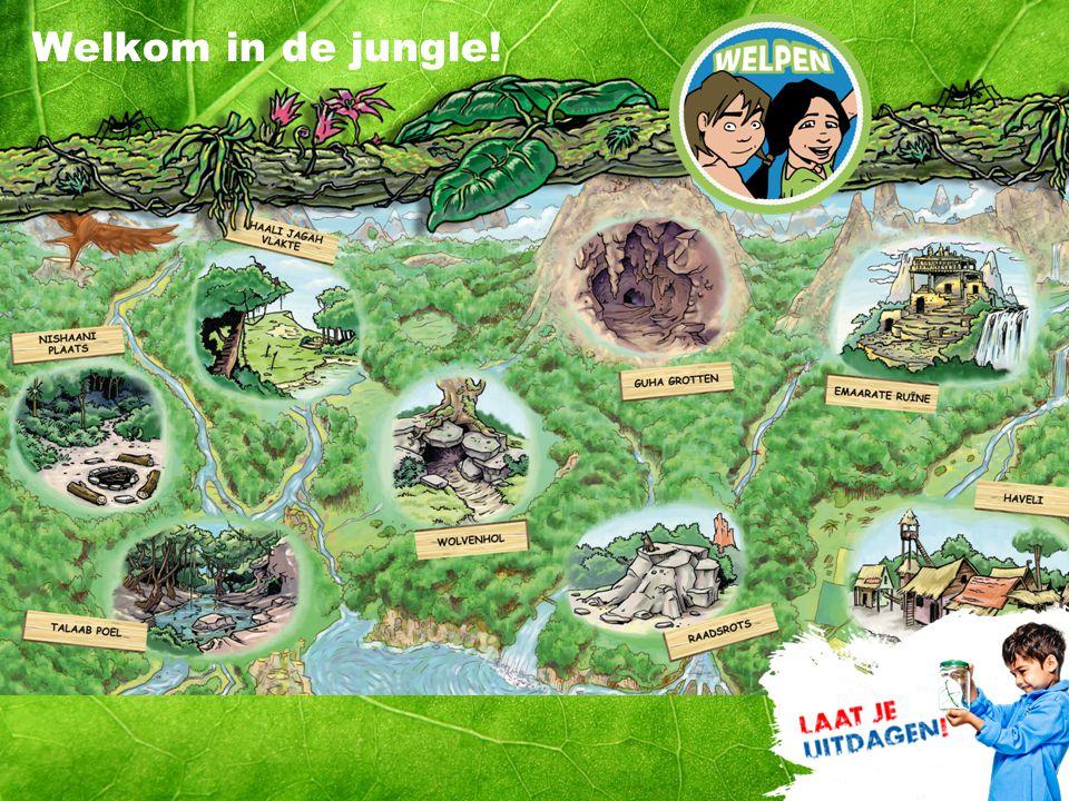 Welkom in de jungle!