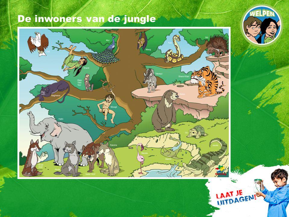 5 De inwoners van de jungle