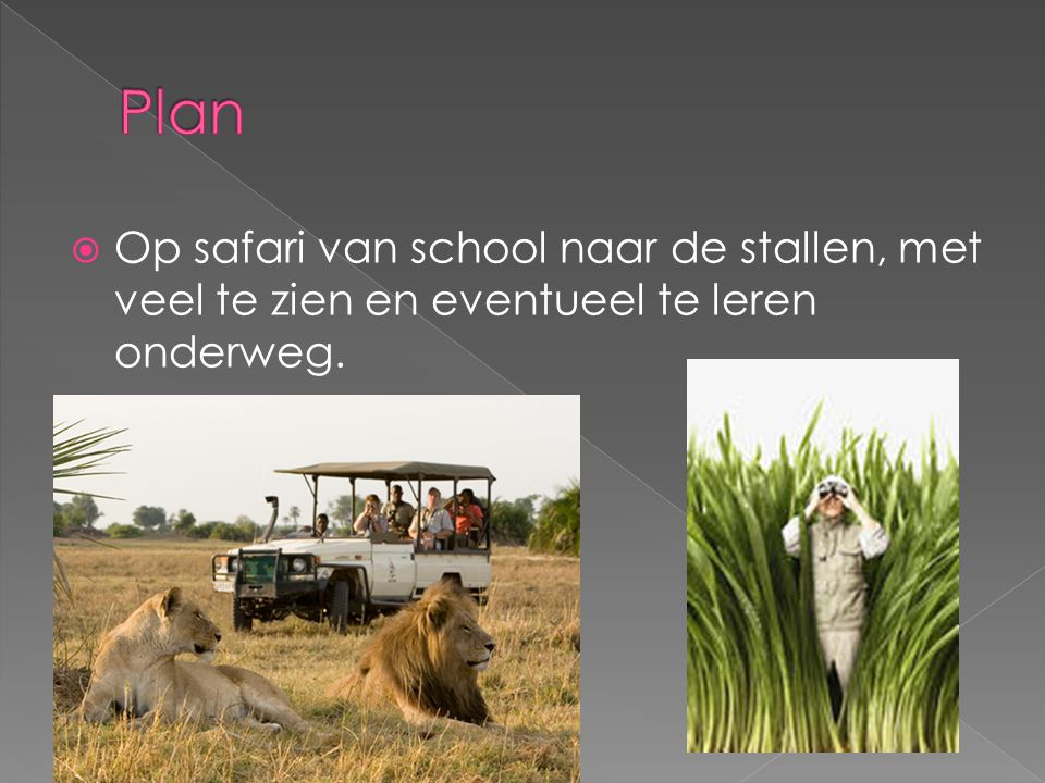  Op safari van school naar de stallen, met veel te zien en eventueel te leren onderweg.