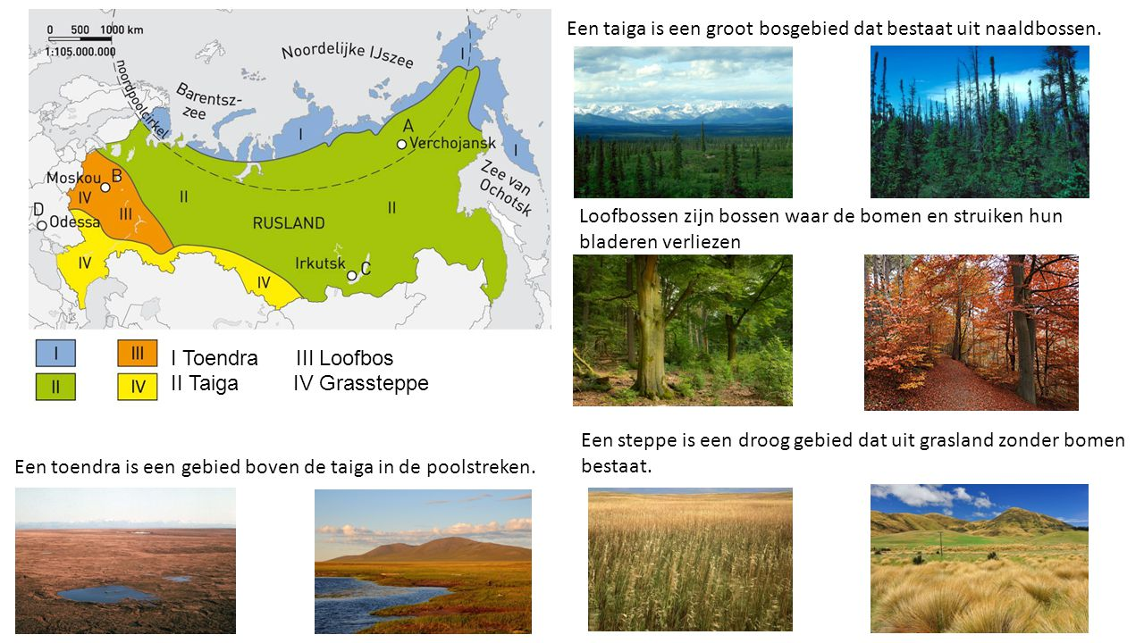 I Toendra III Loofbos II Taiga IV Grassteppe Een taiga is een groot bosgebied dat bestaat uit naaldbossen. Een toendra is een gebied boven de taiga in