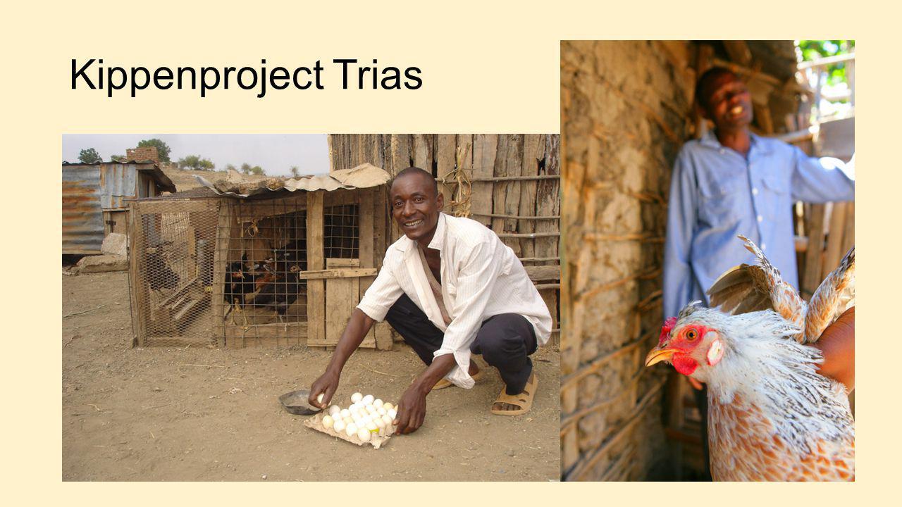 Kippenproject Trias