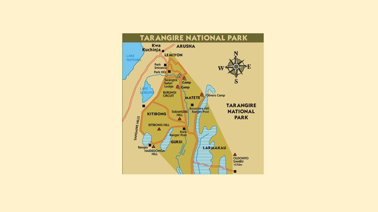 op 115 km ten zuiden van Arusha een lang en smal park van 1360 km² loopt grotendeels langs de rivier Tarangire Overweldigende baobabbomen - sommige met een diameter tot 11 m - en acaciabomen grote moerasgebieden - hun zwarte modder zorgt voor sappige grasgebieden, terwijl langs het water hoge bomen staan, zoals vijgenbomen, tamarinden en worstenbomen